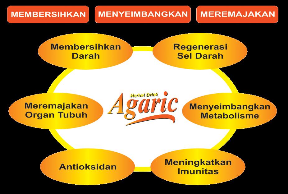 agaric helbal drink