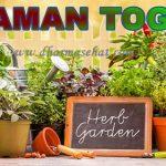 Tanaman Herbal Yang Mudah Ditanam di Halaman Rumah dan Memiliki Banyak Manfaat