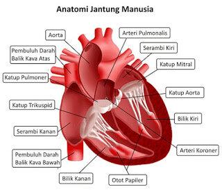 7 Rahasia Menjaga Kesehatan Jantung