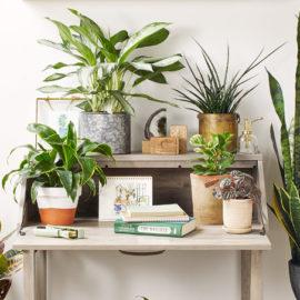 Jenis tanaman hias penyerap racun udara